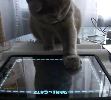 Кот играет на iPad