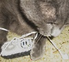 Кот и ipod