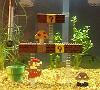 Домашний аквариум в стиле Марио